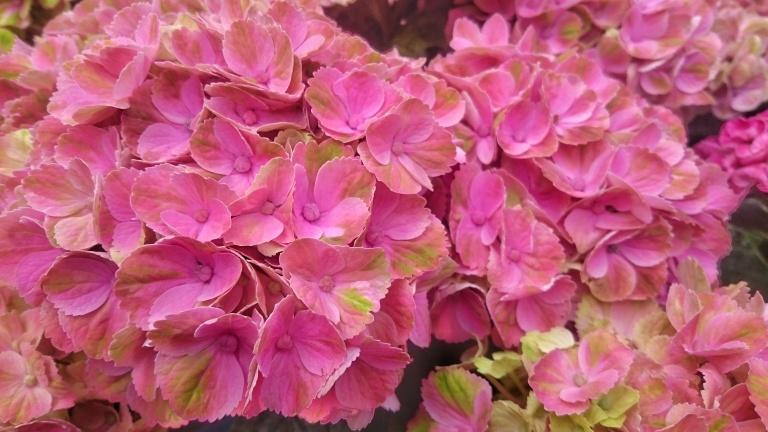 #PlantsForBlossfeldt