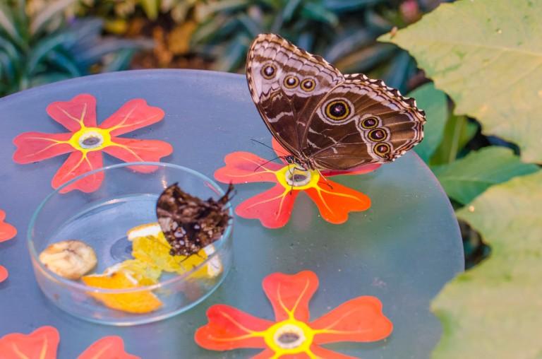 Schmetterling-8388