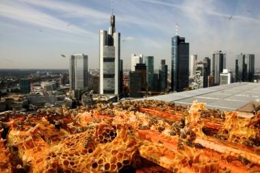 (c) Jumeirah Frankfurt