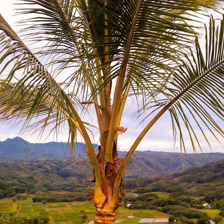 Kaua'i - Garden Isle